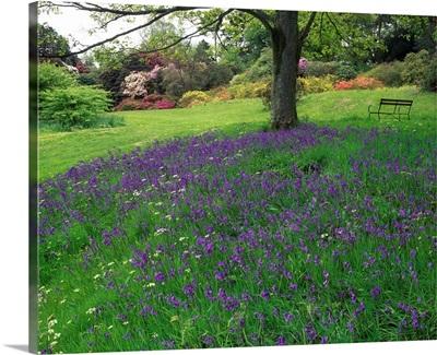 Rowallane Garden, County Down, Ireland, Wild Garden