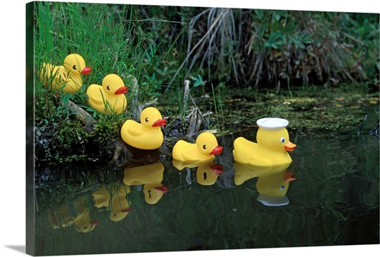 Rubber Ducks in a Row Pond Southcentral Alaska Wall Art, Canvas ...