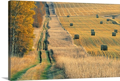 Rural Road And Hay Field, Fall Harvest Near Cremona, Alberta, Canada