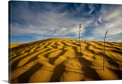 Sahara Desert, Tunisia, Africa