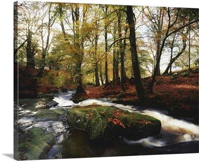 Sally Gap, County Wicklow, Ireland, Creek In Woods In Autumn