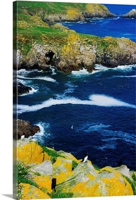 Saltee Islands, Co Wexford, Ireland