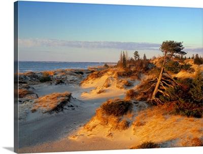 Sand Dunes At Sunset, Lake Huron, Pinery Provincial Park, Ontario, Canada