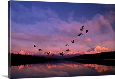 Sandhill cranes flying past Mt McKinley Sunset Alaska & Wonder Lake Summer Composite
