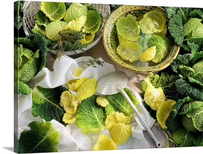 Savoy cabbage in a still-life setting