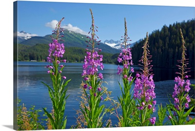 Scenic view of Auke Lake and Fireweed with Mendenhall Glacier and Coast Range Mountains