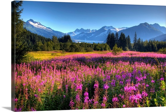 Wildflowers At Mendenhall Wall Art Canvas Prints Framed