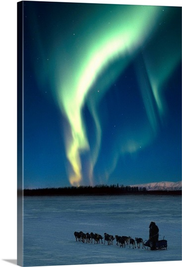 Scenic view of musher with Northern Lights overhead Alaska, Winter