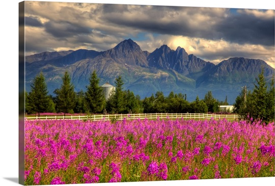 Scenic view of pioneer peak with fireweed in the foreground palmer alaska hdr