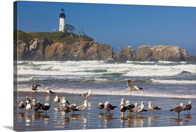 Seagulls On The Beach And Yaquina Head Lighthouse On The Oregon Coast; Oregon