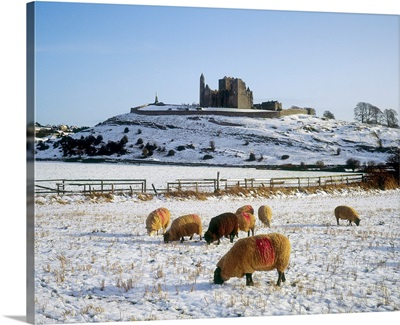 Sheep On A Snow Covered Landscape In Front Of A Castle, Republic Of Ireland