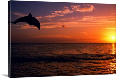 Silhouette Of Bottlenose Dolphin Leaping Over Ocean At Sunset, Caribbean Sea