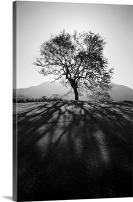 Silhouetted tree on grassy knoll, Shadows in foreground
