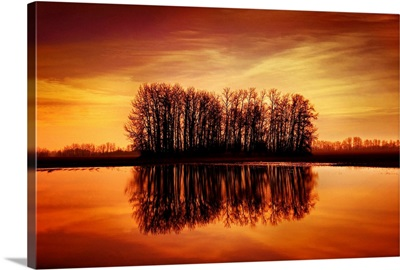 Silhouetted Trees Reflected On Water