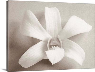 Single white orchid on white background