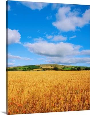 Slieveardagh Hills, Co Kilkenny, Ireland, Wheat Field