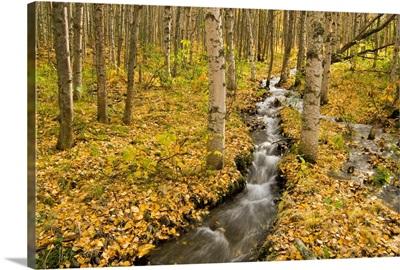 Small creek flows through autumn leaf covered forest floor Chugach State Park