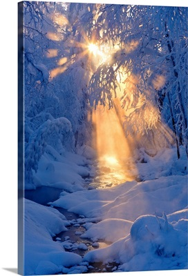 Small stream in a hoarfrost covered forest with rays of sun filtering through the fog
