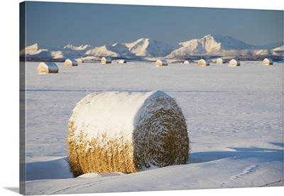 Snow-Covered Hay Bales; Okotoks, Alberta, Canada