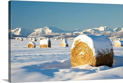 Snow-Covered Hay Bales, Okotoks, Alberta, Canada