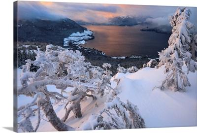 Snow covered mountain hemlock on a subalpine ridge overlooking Zimovia Strait