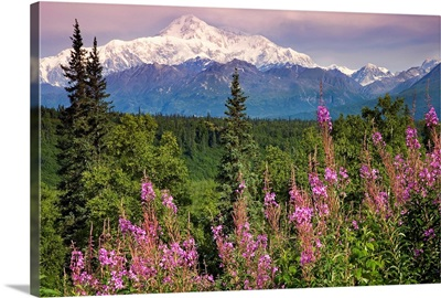 Southside view of Mt.McKinley with fireweed Southcentral Alaska along Parks Highway