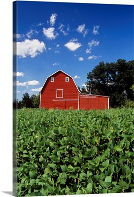 Soybean Field And Red Barn Near Anola, Manitoba, Canada