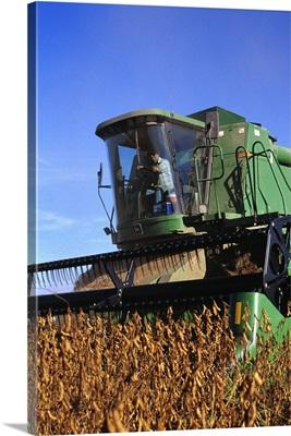 Soybean harvesting, Arkansas