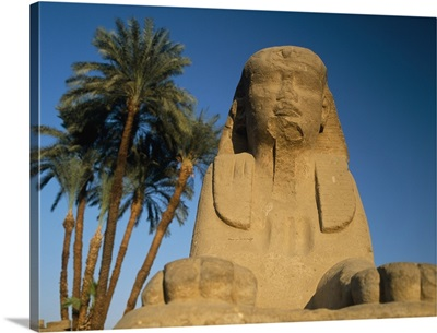 Sphinx Statue In Front Of Date Palms; Luxor, Egypt
