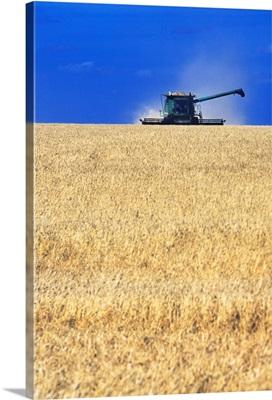 Spring Wheat Harvest, Tiger Hills, Manitoba, Canada