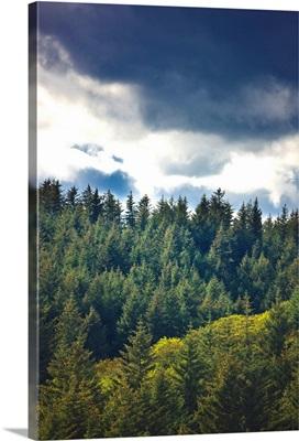 Spruce Tree forest, Chiniak Bay, Kodiak Island, Southwest Alaska, Fall
