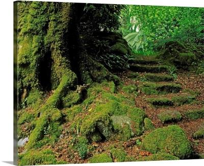 Steps In The Wild Garden, Galnleam House, Co Kerry, Ireland