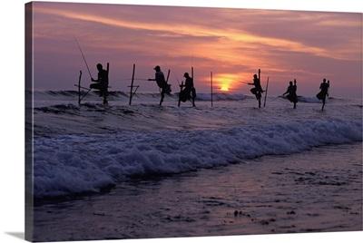Stilt Fishermen Silhouetted At Sunset; Sri Lanka, Asia