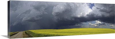 Storm clouds gather over a sunlit canola field and country road, Alberta, Canada