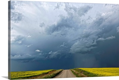 Storm clouds gather over a sunlit canola field and road, Alberta, Canada