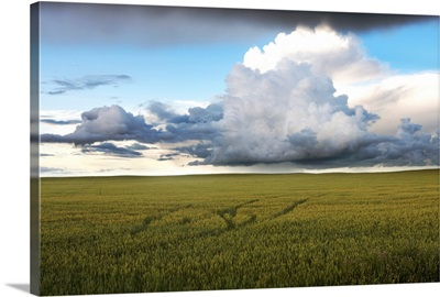 Storm Clouds Over A Grain Field, Central Alberta, Canada