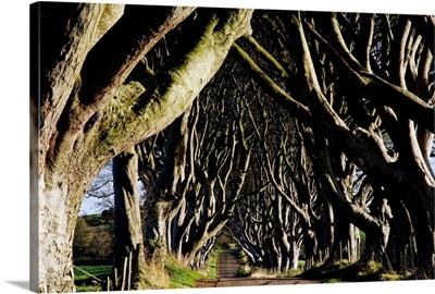 Stranocum, County Antrim, Ireland
