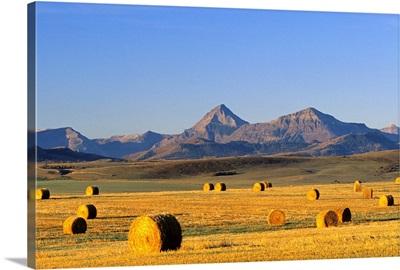 Straw Bales, Pincher Creek, Alberta, Canada