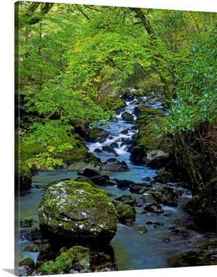 Stream Flowing Through A Forest, Glengarriff, County Cork, Republic Of Ireland