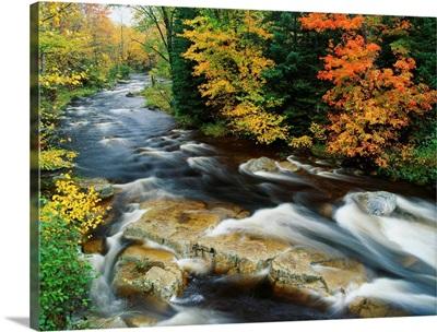 Stream Flowing Through Forest In Vermont