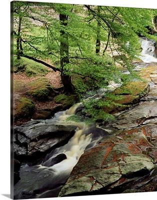 Stream In The Woods, Kilbride, County Antrim, Ireland
