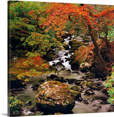 Stream Near Glengariff, County Cork, Ireland