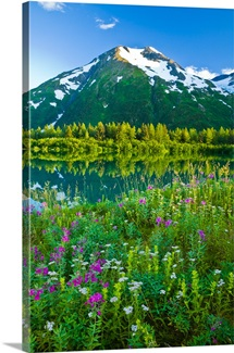 Summer scenic in Portage Valley and lake lined with wildflowers, Chugach National Forest