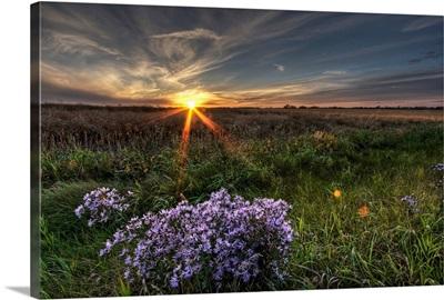Summer Sunset Over Prairie Wildflowers, Alberta, Canada