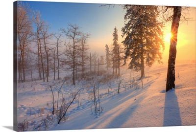 Sun Rising Behind Trees On Snowy Cattle Pasture In Winter, Central Alberta, Canada