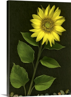 Sunflower With Rocks
