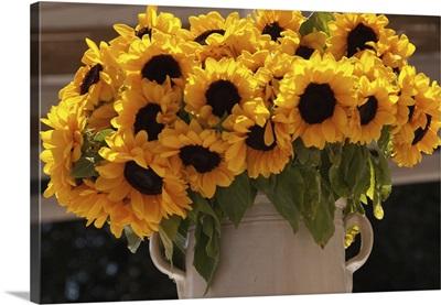 Sunflowers In A Ceramic Vase, Puglia, Italy