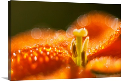 Sunlight reflects from morning dew on a flower, Astoria, Oregon