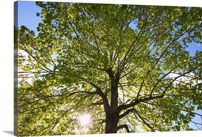 Sunlight Through The Trees In A Park, Portland, Oregon