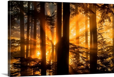 Sunrays peak through fog and the trees of the Tongass National Forest, Juneau Alaska